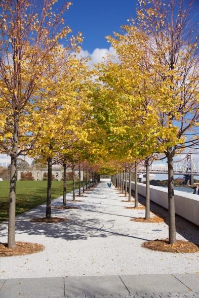 Sedikit pohon yang ada di Freedom Park
